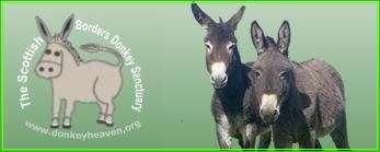 donkey heaven