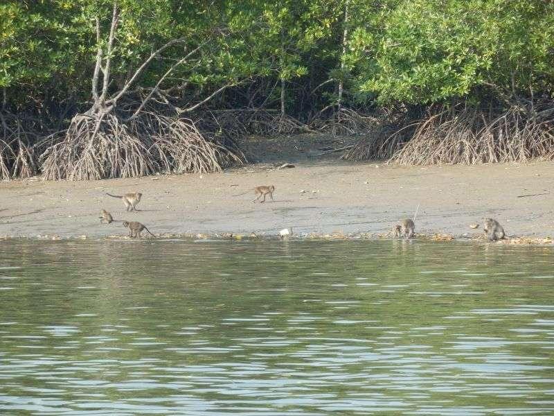 Similan Island 21